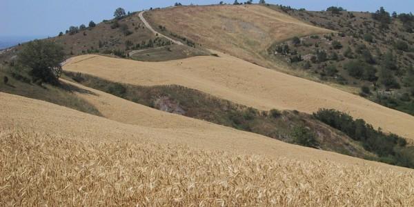 Piccola Cassia Samoggia